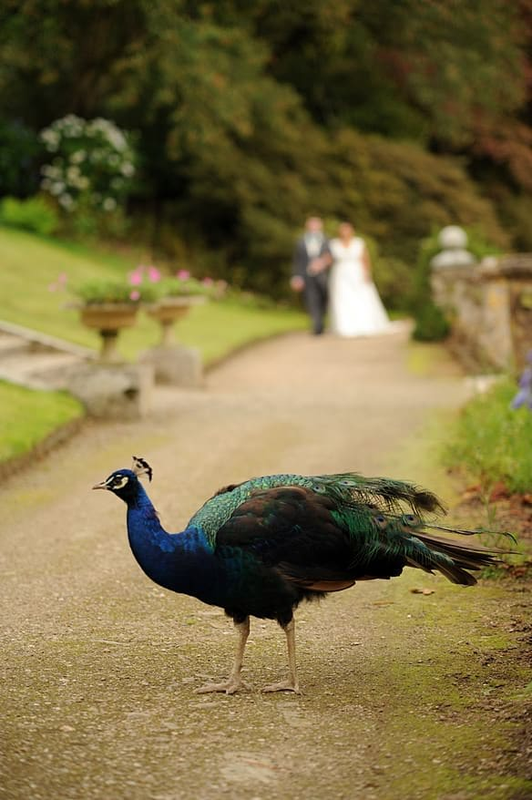 Wedding at Pencarrow House 4