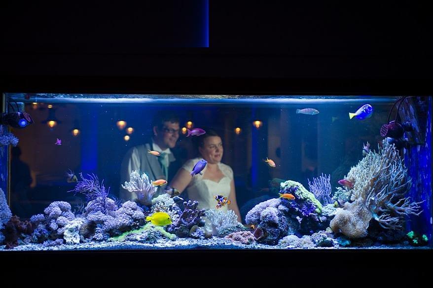 The marine fish tank at St Michaels hotel