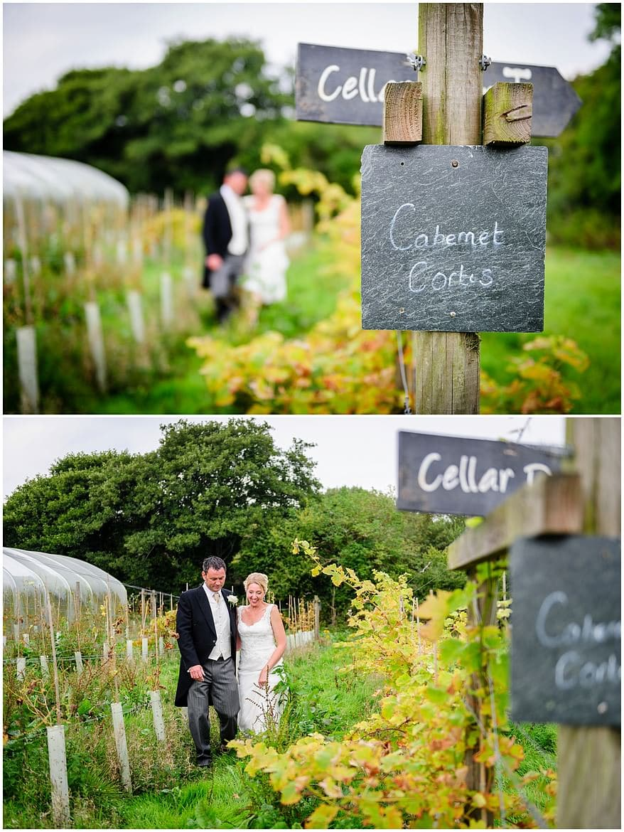 Bride and groom in the vine yard at Knightor winery