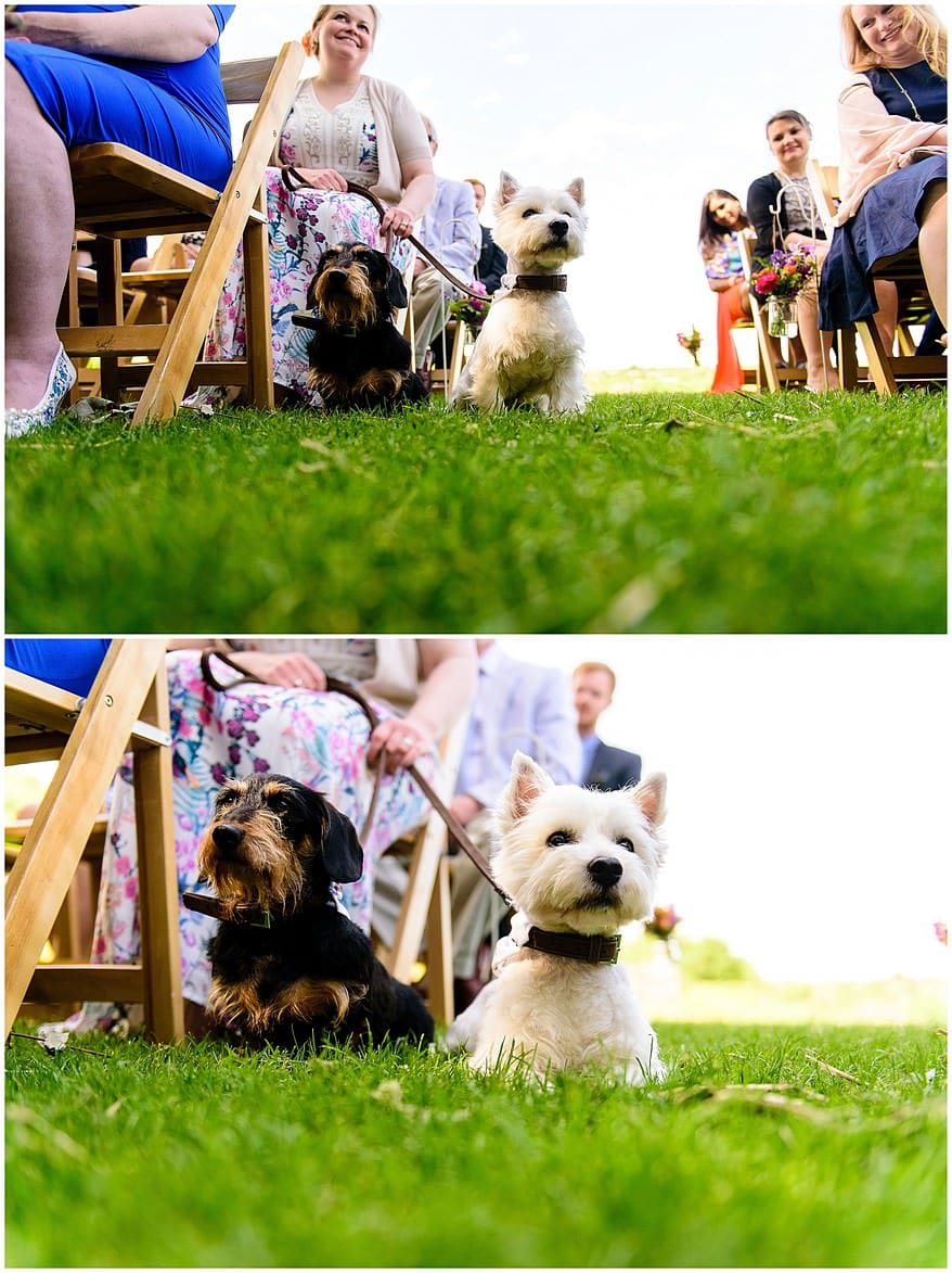 Dogs at a Trevenna Barns wedding
