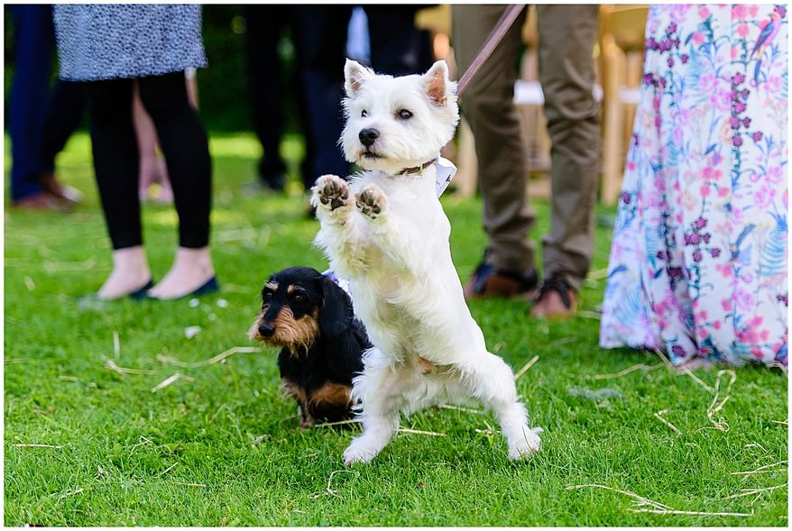 Dog friendly wedding venue in Cornwall