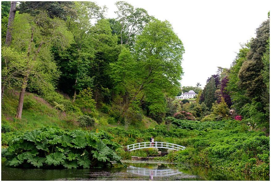 Mallard Pond at Trebah gardens
