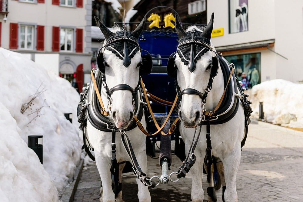 Wedding horse and carriage in Zermatt
