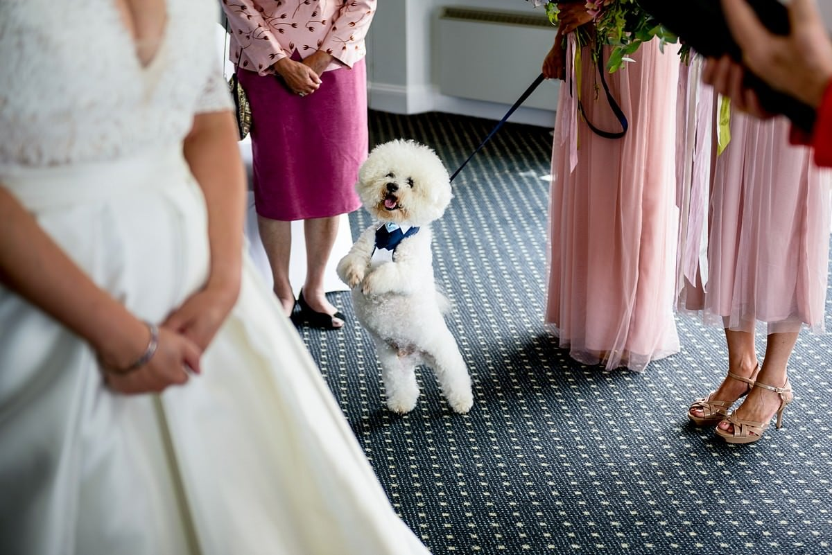 dog wedding guest at Karma Hotel