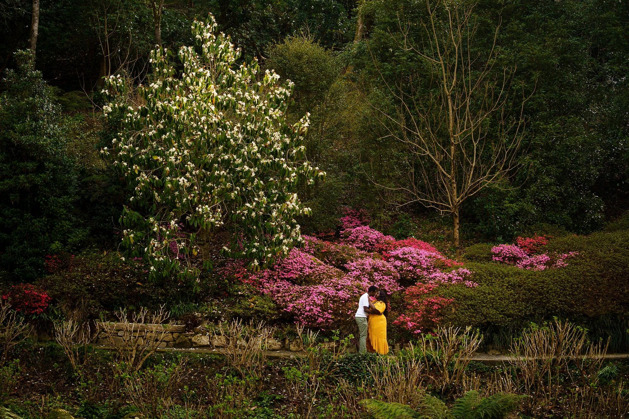Trebah gardens wedding proposal 11
